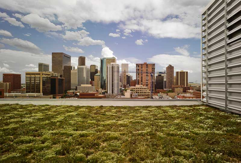 The greening roofs of Denver