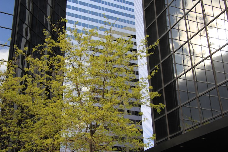 Greening up roads and buildings