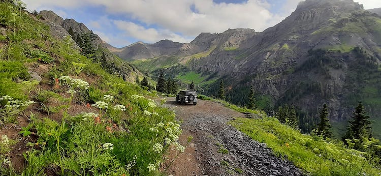 Wildflowers and the warming Alpine and Arctic
